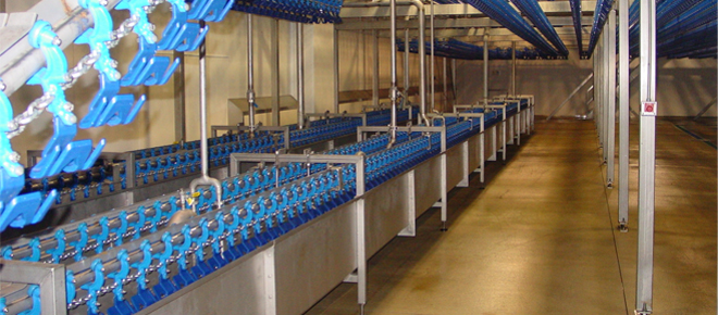 Innovative Poultry Slaughter Line Solutions
